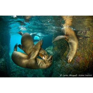 Viaje a Baja California, La Paz con Blue Planet