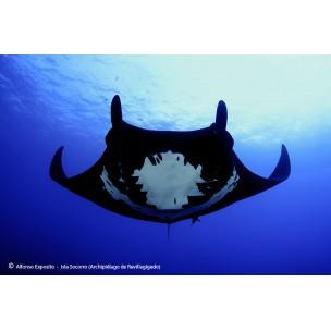 Revillagigedo a bordo del Rocío del Mar con Blue Planet