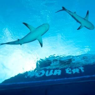 Bahamas a bordo del Aquacat