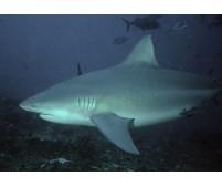"Sudáfrica y Mozambique ""Shark Experience"""
