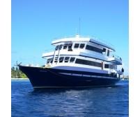 MALDIVAS - STING RAY